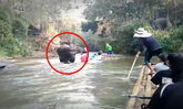 คนเชียงใหม่แชร์กระหึ่ม นาทีระทึก ช้างพุ่งใส่แพนักท่องเที่ยวคว่ำกลางลำน้ำ (มีคลิป)