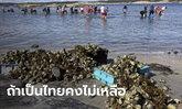 """""""หอยนางรม"""" ระบาดทะเลนอร์เวย์ ทางการหนุนประชาชนช่วยกิน คนไทยเห็นแล้วเปรี้ยวปาก"""