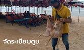 จับหมาจรจัดหาดจอมเทียน ชาวบ้านหวั่นประวัติศาสตร์ซ้ำรอย ไล่กัดเด็กบาดเจ็บมาแล้ว