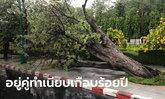 ลือสะพัดลางร้ายรัฐบาล ต้นมะขามยักษ์เก่าแก่คู่ทำเนียบล้มครืน