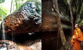 ฮือฮาอีก พบส่วนหัวของหินพญานาคไม่ไกลจากถ้ำนาคา เหมือนป่าบดบัง