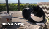 แฟนคลับเศร้า แมวหัวหน้าหน่วยจับหนูกระทรวงต่างประเทศอังกฤษ ยื่นใบลาออกแล้ว