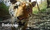 """เปิดกล้องเจ้าหน้าที่ลาดตระเวนผู้ล่วงลับ พบภาพ """"เสือโคร่ง"""" ตอกย้ำผลงานพิทักษ์ป่า"""