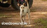 วอนช่วยหมาจรจัดเคราะห์ร้าย เหยียบบ่วงดักสัตว์ป่า ขาขาดกระดูกโผล่สุดเวทนา
