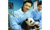 องค์การสวนสัตว์ จับมือ ทรู ดันกิจกรรมครอบครัวหมีแพนด้า