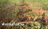 ชาวสวนสุดช้ำ โขลงช้างป่าทับลาน พังสวนขนุนกว่า 300 ต้น 3 วัน เงิน 3 แสนหายวับ
