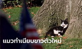 """""""ไบเดน"""" เล็งเลี้ยงแมวเพิ่ม หลังเข้าทำเนียบขาว รับตำแหน่ง ปธน. สหรัฐฯ"""