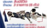 """ปปส.ภาค 2 เปิดประมูลแมวของกลาง 6 ตัว ของ """"กุ๊ก ระยอง"""" พ่อค้ายาเสพติดแล้ว"""