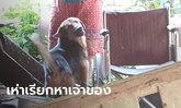 ยายวัย 62 ดับปริศนาคาบ้าน สุดงงหมาคู่ใจตายด้วย นอนนิ่งหลายชั่วโมง จู่ๆ ฟื้นมาเห่า