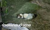 สุดสลด อดีต ผอ.โรงเรียน กระโดดสระบัวช่วยหมา รากบัวพันขาจมน้ำดับต่อหน้าเมีย