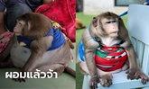 """ลิง """"ก็อตซิลล่า"""" น้ำหนัดลดลง 6.2 กก.แล้ว ที่แท้ป่วยไทรอยด์ หมอแนะส่งคืนเจ้าของ"""