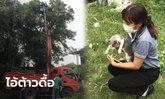 ปฏิบัติการช่วยไอ้ต้าว! น้องแมวหาย เจ้าของตามหาข้ามวัน สุดท้ายเจอติดบนยอดไม้สูง 6 เมตร