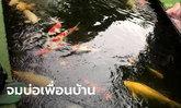 อุทาหรณ์ ปล่อยลูก 6 ขวบเล่นลำพัง แอบย่องเล่นบ่อปลาคาร์ปของเพื่อนบ้าน ก่อนจมน้ำดับ