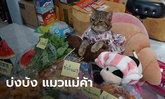 """เปิดใจเจ้าของ """"บ่งบ้ง"""" แมวแม่ค้าสุดฮอต รับงานรีวิวรัวๆ ไม่ต๊าซตรงไหนเอาปากกามาวง!"""