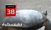 """เลขเต่าถูกอีกแล้ว! เลขเด็ด """"เต่าขี้ราด"""" เดินเข้าบ้านสาว ออกตรงเลขท้ายสองตัว 38"""