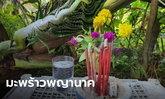 ฮือฮา! เจ้าของบ้านฝันเห็นงูใหญ่ เช้ามาเจอต้นมะพร้าวในบ้านแทงยอดเหมือนพญานาค