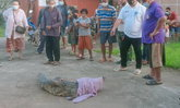 แทบช็อก พบจระเข้ยาว 2 เมตร มานอนอาบแดดอยู่ข้างบ้าน