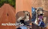 โซเชียลแสนเอ็นดู หมาจรวิ่งตามมอเตอร์ไซค์อย่างไม่ย่อท้อ สุดท้ายได้นั่งตระกร้ากลับบ้าน