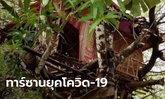 แรงงานเมียนมากลับบ้าน โดนไล่ไปกักตัว 14 วัน ต้องสร้างรังอาศัยบนต้นไม้