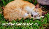 ฮ่องกงพบแมวของผู้ป่วยโควิด-19 มีผลตรวจไวรัสเป็นบวก!