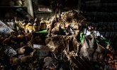 ผู้เชี่ยวชาญเรียกร้อง WHO จับมือรัฐบาลทั่วโลก ปิดตลาดค้าสัตว์ ป้องกัน COVID-19