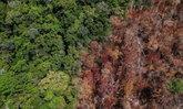 """โรคระบาดป้องกันได้ ด้วยการ """"หยุดตัดไม้ทำลายป่า"""""""