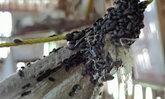 สุดทน! แมลงปีกแข็งนับล้านบุกบ้านหญิงชราวัย 87 ปี ชาวบ้านโป่งวอนหน่วยงานช่วย
