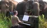 ซึ้ง! หนุ่มผู้ดีเล่นเปียโนให้ช้างไทยตาบอดฟัง