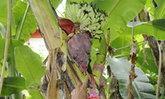 ดอนเจดีย์ถูกหวยยกหมู่บ้าน! กล้วยป่าออกผลเลข 7