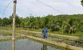 ไอเดียเจ๋ง! ปลูกข้าวบ่อปูน ต้นทุนต่ำ ได้คุณภาพสูง