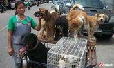 สาวนครสวรรค์เก็บหมาเลี้ยง 20 ตัว ยอมโดนไล่ เพื่อนอนอยู่กับหมา