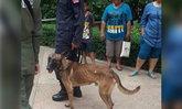 ชาวเน็ตวิจารณ์สนั่น สุนัขตำรวจ K9 ผอมโซ แต่ยังปฏิบัติภารกิจ