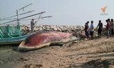 ซากวาฬบรูด้ากว่า 10 ตัน อ่าวคลองวาฬ จ.ประจวบคีรีขันธ์