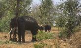 โขลงช้างทำร้ายรองหน.ป่าไม้เขาสอยดาวเสียชีวิต