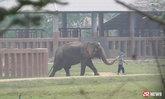 อากาศร้อนจัด! ช้างพังวัย 10 ปี หงุดหงิดกระทืบคนเลี้ยงเสียชีวิต