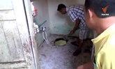 งูหลามโผล่โถส้วมที่ จ.ชลบุรี