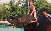 """โลกตามหา """"นิ้งหน่อง"""" ช้างที่ช่วยชีวิตเด็กหญิงรอดจากสึนามิ"""