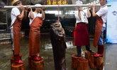 ชาวประมงจีนจับปลาหมอทะเลยักษ์ได้ น้ำหนักกว่า 236 ปอนด์