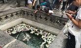 นักท่องเที่ยวแห่ชมวัดม้าขาวในจีน โยนเงินลงบ่อน้ำเพื่อขอพร