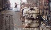"""""""คิม จองอึน"""" แนะชาวเมืองผู้ยากไร้กินเนื้อสุนัข ชี้มีวิตามินสูง"""