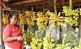 พิษแล้งกล้วยกำแพงเพชราคาขยับเครือละ350บ.