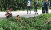 หมานั่งรอริมถนนเมืองจันท์ ยังเมินใส่-หาเจ้าของไม่ได้