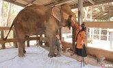 """เปิดใจ """"โซไรดา"""" ผู้ก่อตั้ง รพ.ช้าง ประกาศขอยุติทำมูลนิธิเพื่อนช้าง"""