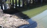 ชาวปทุมฯร้องพบน้ำเสียถูกปล่อยลงคลองสี่ปลาตายอื้อ
