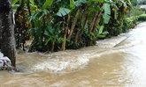 ฝนตกทำพิษณุโลกน้ำท่วม4อ.พื้นที่เกษตรหมื่นไร่จม
