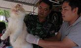 ทหาร-ปศุสัตว์ระนองฉีดวัคซีนให้สุนัข-แมวฟรี
