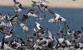 แห่ชมนกเป็ดหงส์สัตว์หายากใกล้สูญพันธุ์จ.พัทลุง