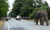 ช้างป่าพลายสีดอแก้วบุกบ้านชาวจันทบุรีเสียหาย