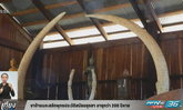 งาช้างแกะสลักพุทธประวัติสมัยอยุธยาอายุกว่า 200 ปีหาย