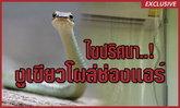 ไขปริศนา!! งูเขียวโผล่ช่องแอร์ทำรังวางไข่ฟักลูกออกเป็นตัว